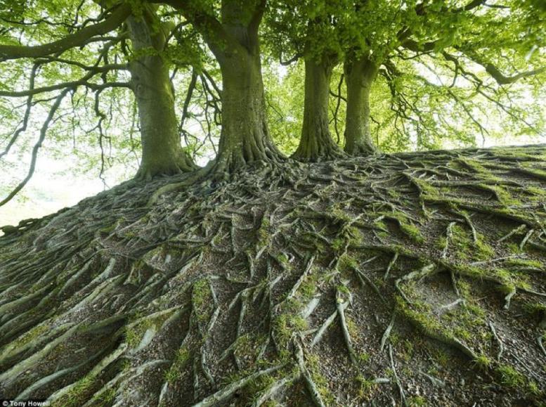 arbre-et-racines.png