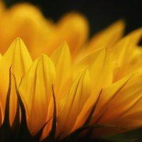 Distinguer Entre espérance ET attente pour mieux se mouvoir dans l'incertitude